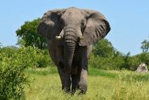 Werbetexte so stark wie ein Elefant